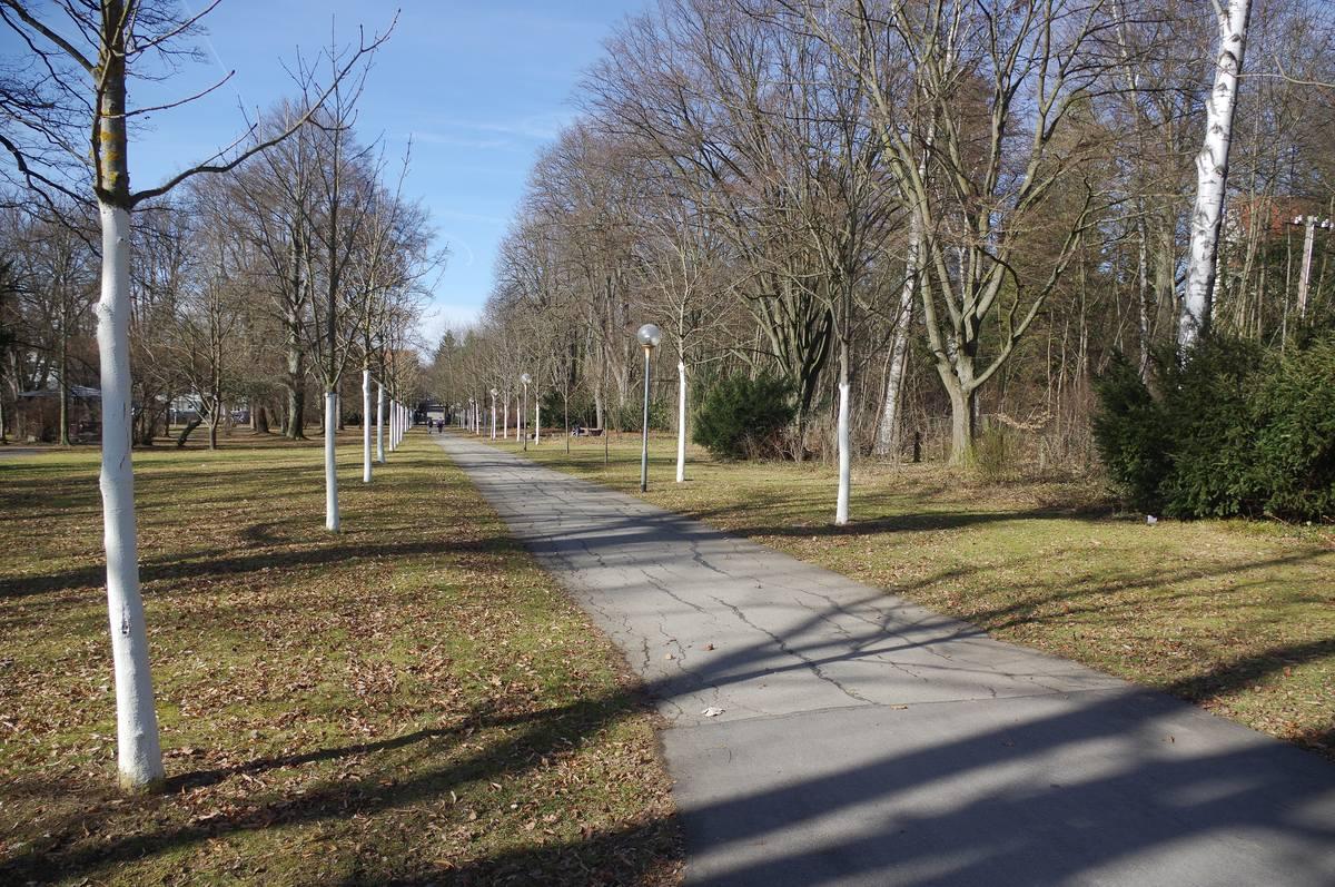 Allee am Ostrand des Stadtgartens.